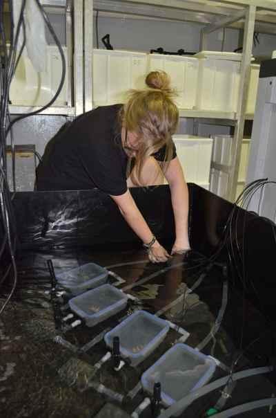 investigación sobre la respiración del pez globo