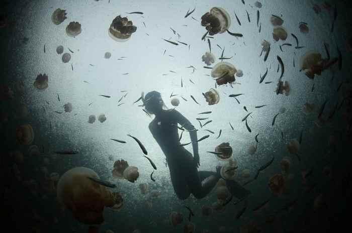 buceando en el lago de las medusas, Palau