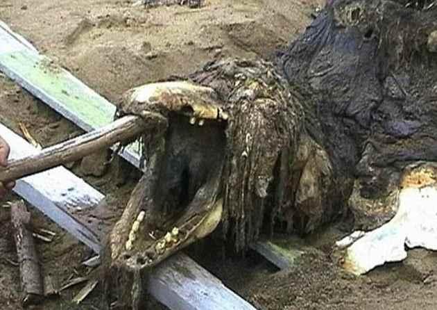cabeza del esqueleto de monstruo marino varado en Rusia