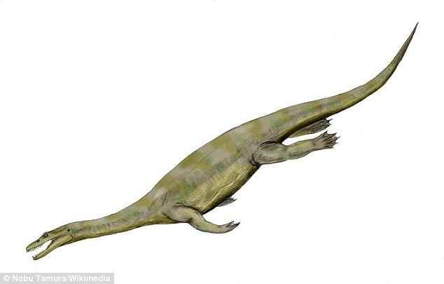 Nothosaurus zhangi (reconstrucción)