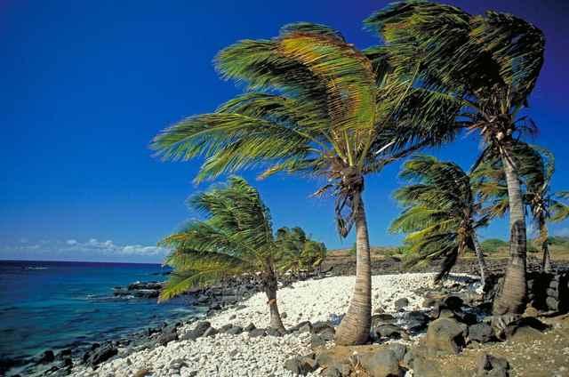 palmeras en el Pacífico