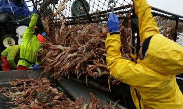 pesca de cangrejo real