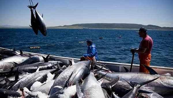 pesca ilegal de atún en Costa Rica