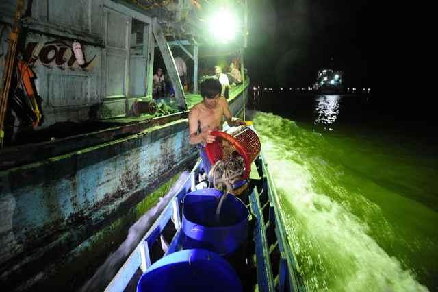 pesca de serpientes marinas venenosas en Tailandia