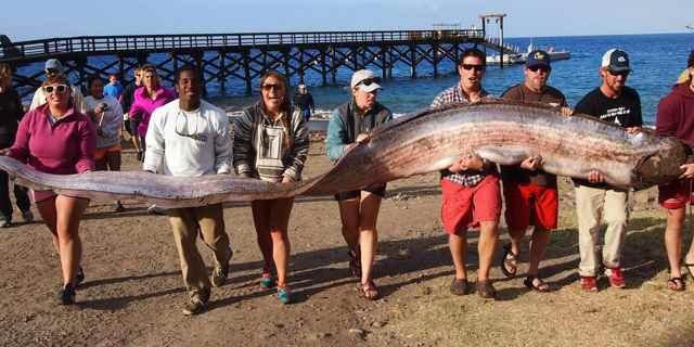 pez remo varado en EE.UU.