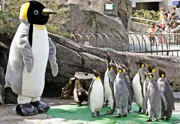 pingüino gigante en Nueva Zelanda