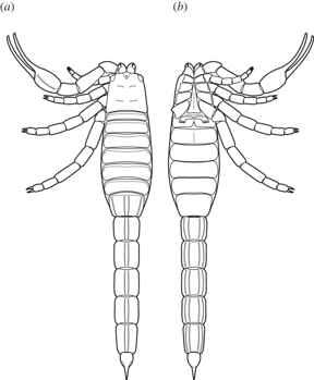 reconstrucción del escorpión Eramoscorpius brucensis