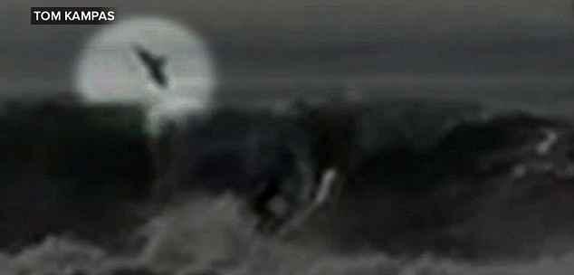 tiburón blanco salta cerca de un surfista