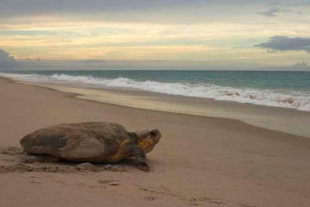 tortuga marina y el campo magnético de la Tierra
