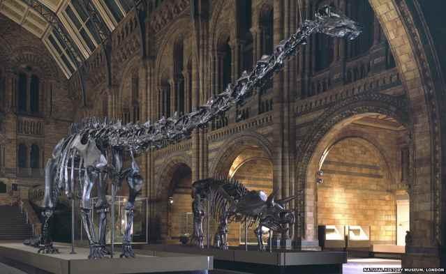 diplodocus Dippy en el Museo de Historia Natural de Londres