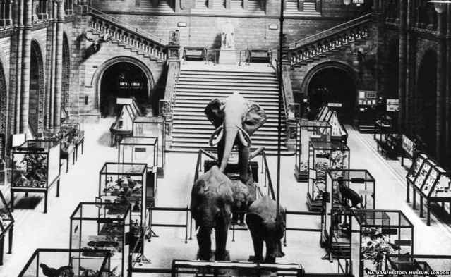 elefantes en el Hall del Museo de Historia Natural de Londres