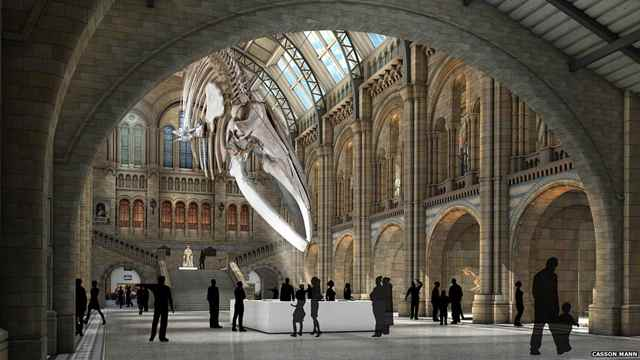 esqueleto de ballena azul en el Museo de Historia Natural de Londres