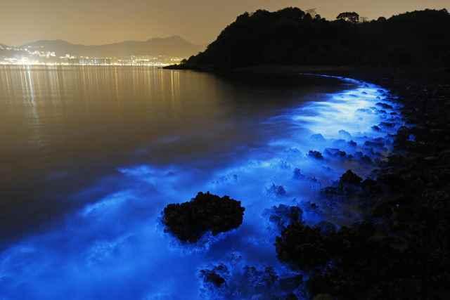 floracion azul de Noctiluca scintillans en Hong Kong