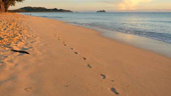mini organismos en la arena de la playa