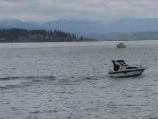 lancha choca con una ballena