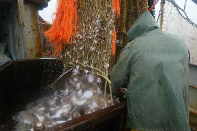 sobrepesca en la Unión Europea