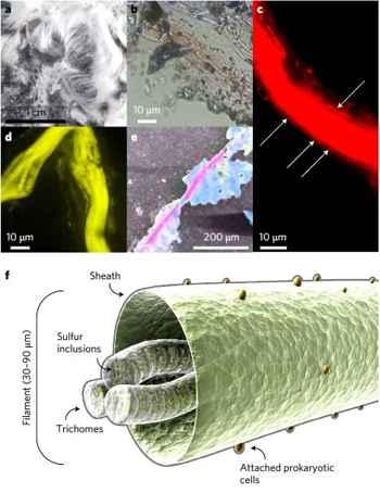 vista micro-macro del cabello de Venus