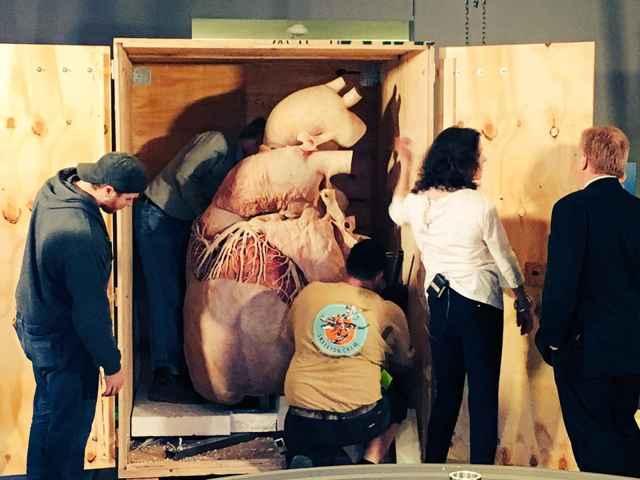 corazón de ballena azul en el Museo Real de Ontario
