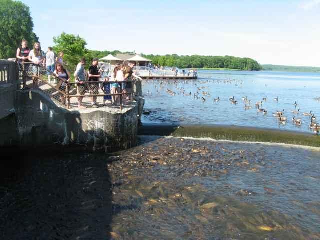 turistas en el aliviadero de Linesville