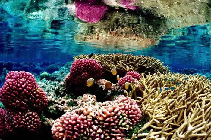arrecife de coral saludable