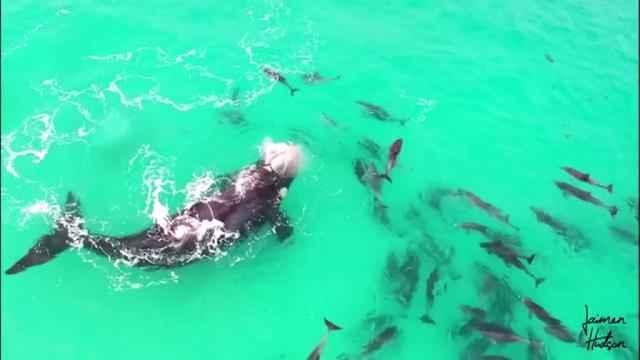 ballena juega con delfines