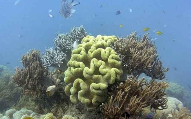 coral blanqueado en la Gran Barrera