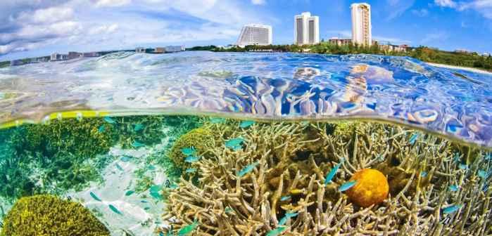 corales recuerdan la contaminación humana