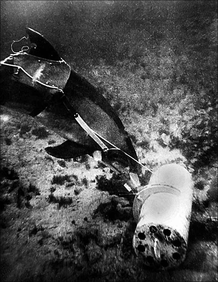 delfín durante la recuperación de un objeto