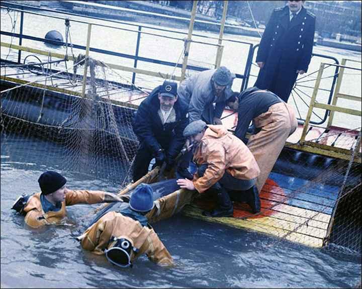 entrenamiento de un delfín por la Armada de Rusia