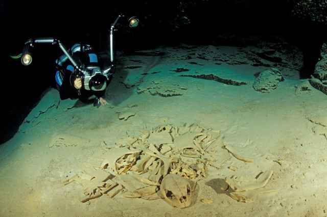 esqueleto de tortuga en Sipadan