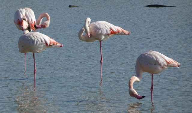 flamencos sobre una pata