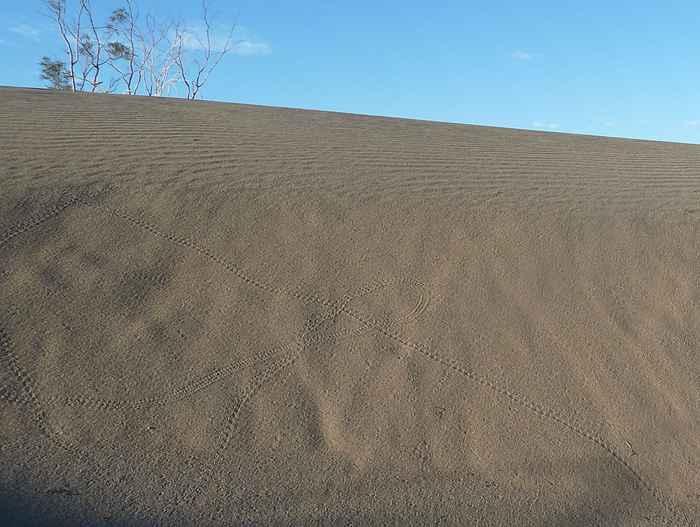 huellas de artrópodos en una duna