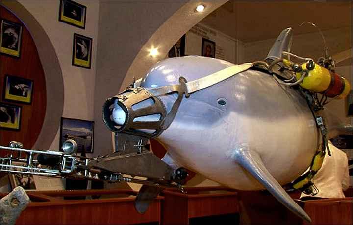 modelo de delfín de la armada de Rusia