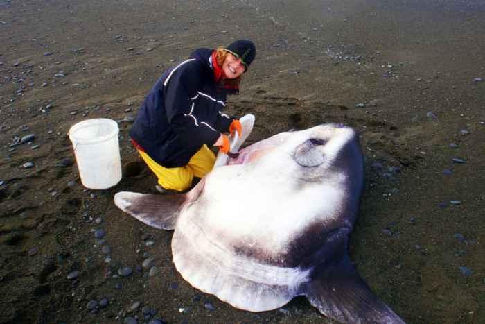 Marianne Nyegaard con un pez luna gigante