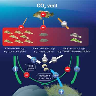 acidificación y aumento de peces maleza