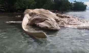 cadáver de ballena en Indonesia