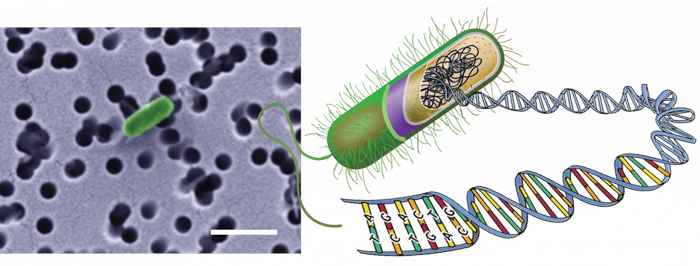 células del lecho marino al microscopio