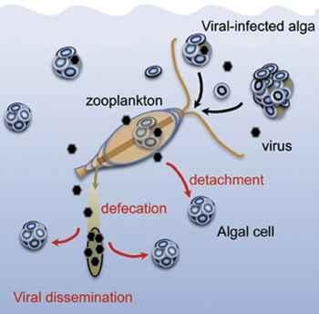 diseminación viral