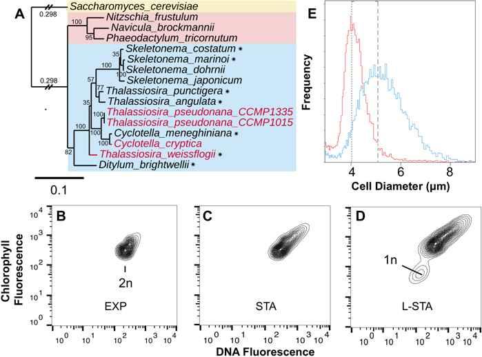 evidencia de miosis en una diatomea