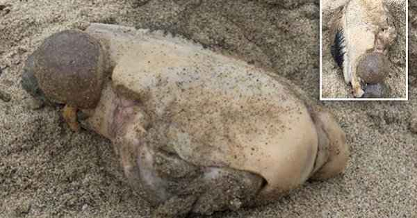 monstruo marino varado en Malibú