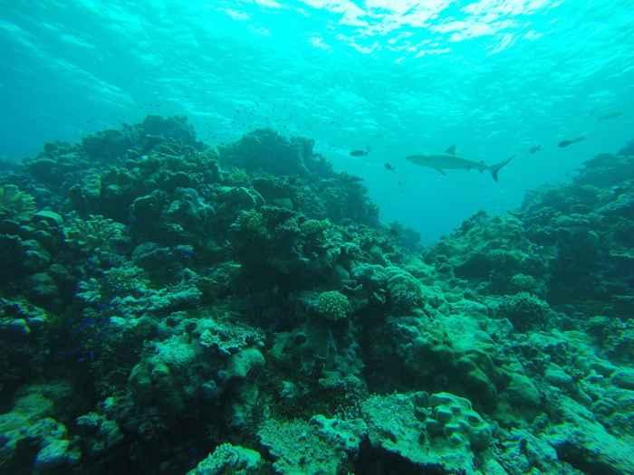 un tiburón en el Atolón Bikini