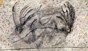 fósil de Capinatator praetermissus