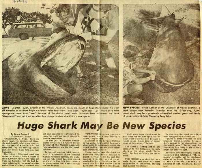 tiburón de boca ancha descubierto en 1976