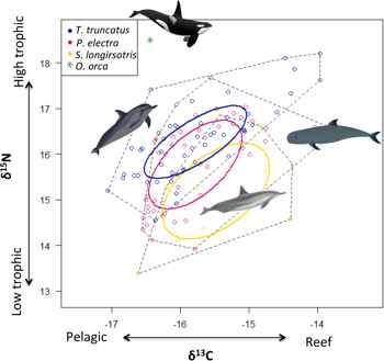 trama espacial de isotopos en la dieta de los delfines