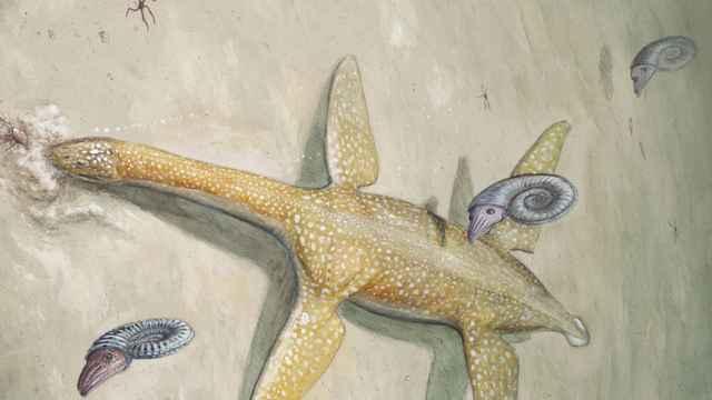 Arminisaurus schuberti
