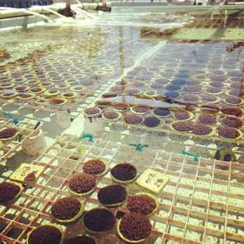 banco de corales en Florida