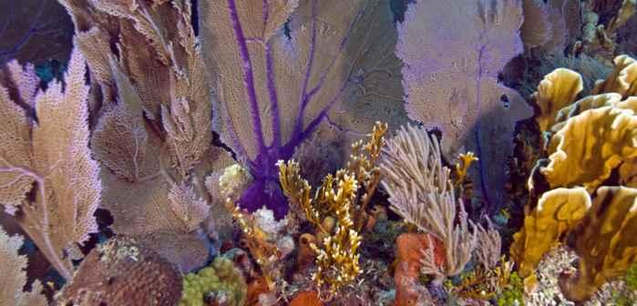 bóveda de corales en Florida