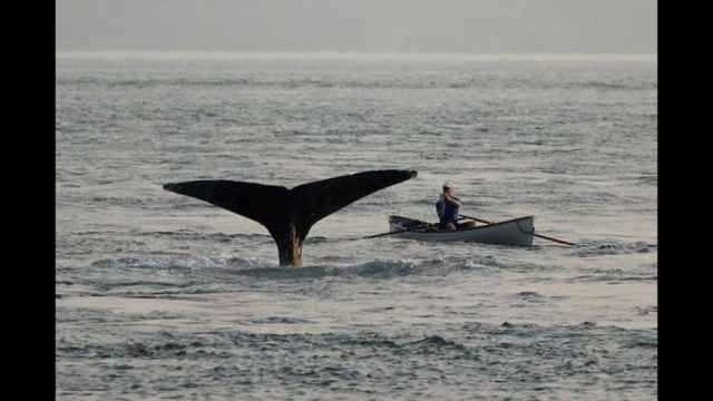 encuentro cercano con una ballena jorobada