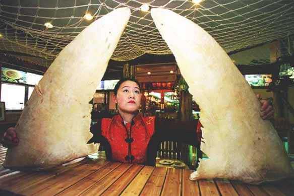aletas de tiburón en un restaurante chino