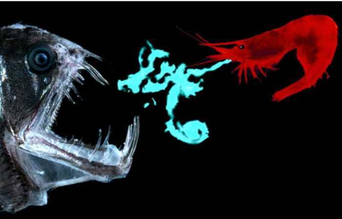 bioluminiscencia en el camarón como mecanismo de defensa
